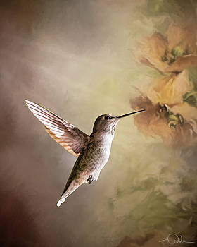 Humming bird in light by Gloria Anderson
