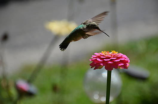 Humming bird by Karen Kersey