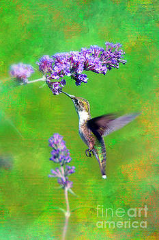 Humming Bird Visit by Lila Fisher-Wenzel