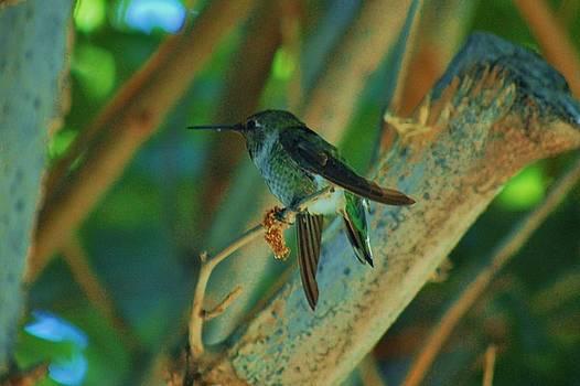 Hummingbird 2 by Helen Carson