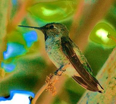 Hummingbird 5 by Helen Carson