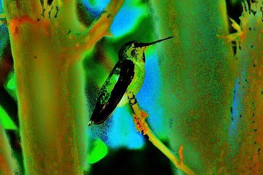 Hummingbird 7 by Helen Carson