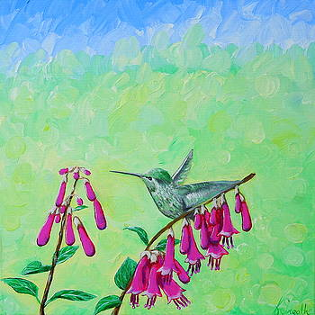 Hummingbird and Cape Fuchsia by Kirsten Sneath
