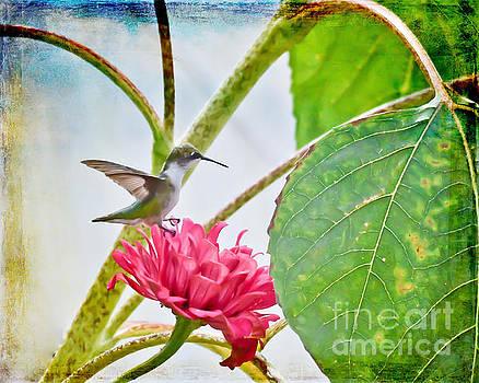 Hummingbird Art - Perched on a Petal by Kerri Farley