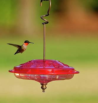 Hummingbird at feeder # 3 by Peter Ponzio