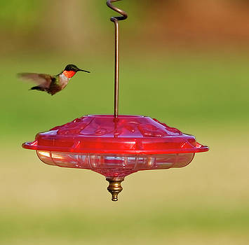 Hummingbird at feeder #2 by Peter Ponzio