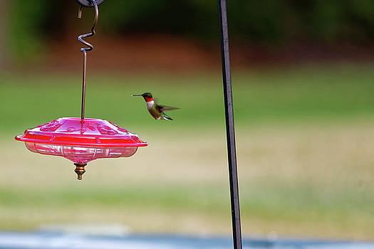 Hummingbird at feeder #4 by Peter Ponzio