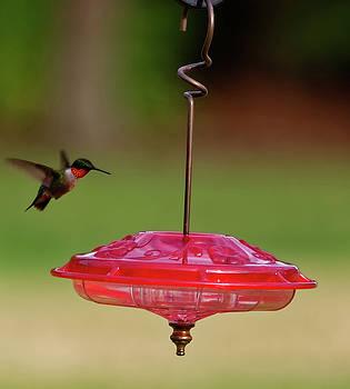 Hummingbird at feeder by Peter Ponzio