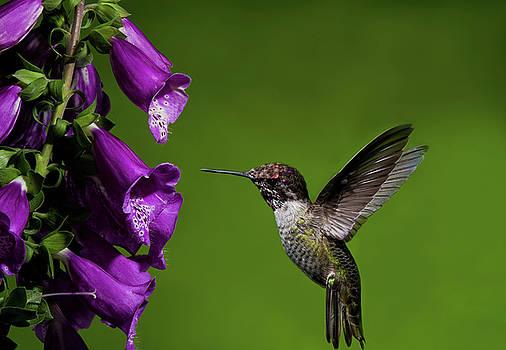 Lara Ellis - Hummingbird Ballet
