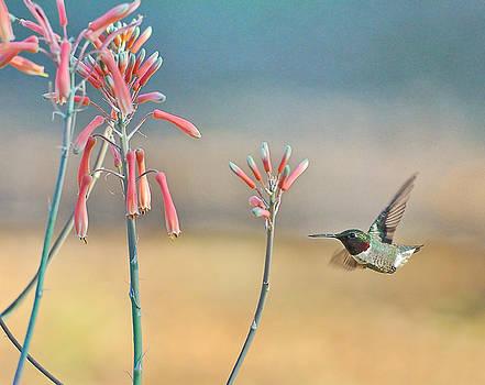 Wayne Nielsen - Hummingbird Beak on Horizon