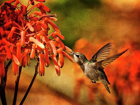 Saija Lehtonen - Hummingbird Breakfast Arizona Style