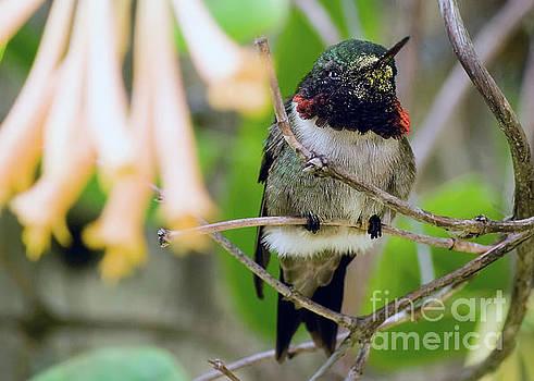 Hummingbird by Carolyn Abell Hodges