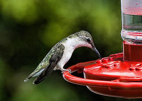 Edward Sobuta - Hummingbird