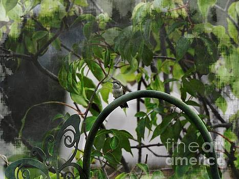 Hummingbird by Ella Kaye Dickey