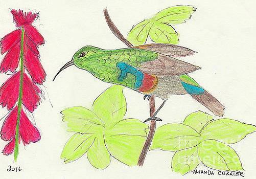 Hummingbird Eyeing A Cardinal Flower by Amanda Currier