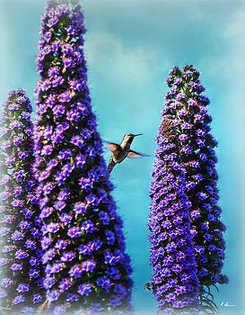 Hummingbird by Hanny Heim