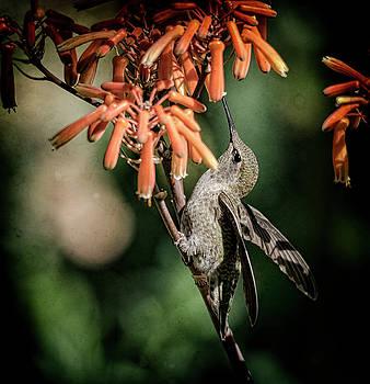 Saija Lehtonen - Hummingbird Happiness