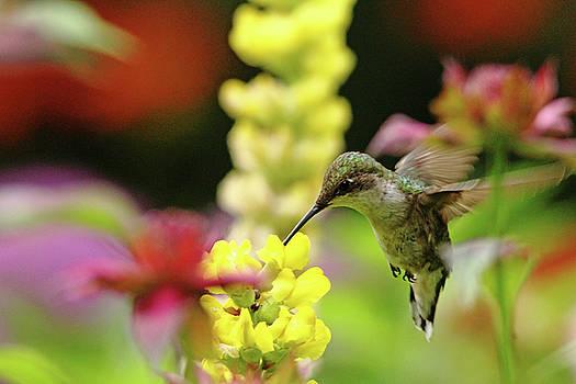Debbie Oppermann - Hummingbird Heaven