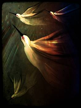 Hummingbird II by Betsey Walker Culliton
