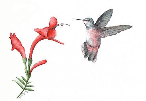 Hummingbird II by Marsha Young