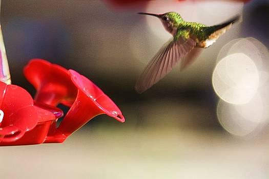Hummingbird in flight by Russell  Barton