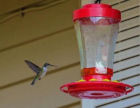 Hummingbird In Flight by John Forde