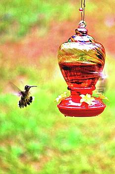 Hummingbird in July by James Potts