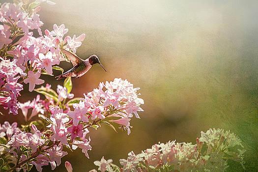 Hummingbird in Morning Sun by Victoria Winningham