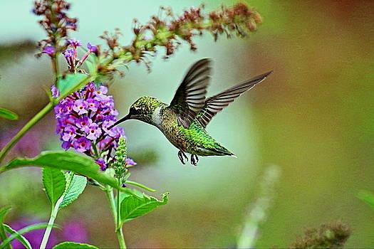 Hummingbird in Paradise  by DVP Artography