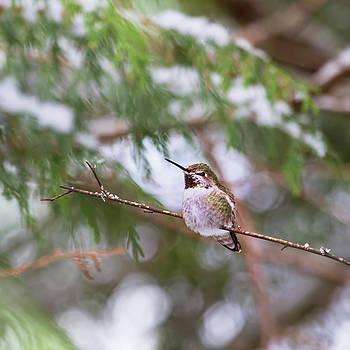 Peggy Collins - Hummingbird in Winter