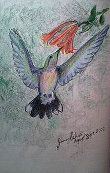 Hummingbird by Jamey Balester