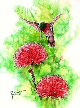 Hummingbird by John YATO