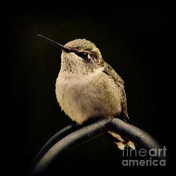 Hummingbird by Kelly Nowak