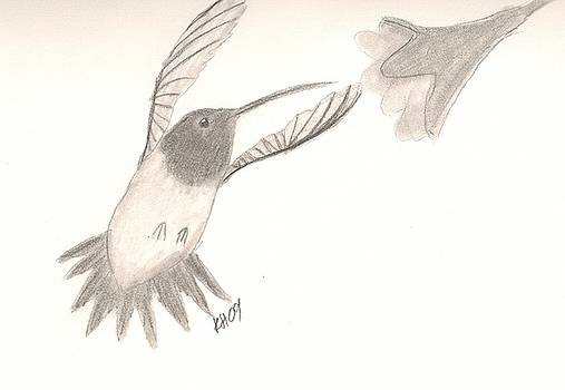 Hummingbird by Kristen Hurley