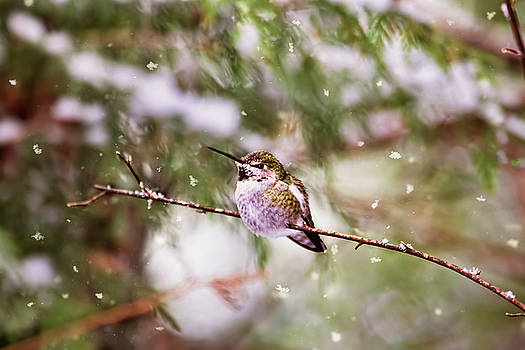 Peggy Collins - Hummingbird - Let it Snow