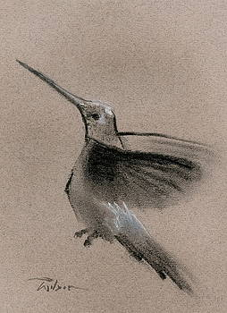 Fine Art charcoal rendering of a hummingbird in flight. by Ron Wilson