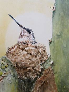 Hummingbird Nesting in Cactus by Marilyn  Clement