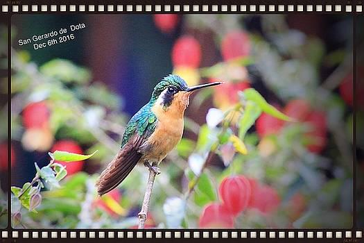 Pascal Schreier - Hummingbird
