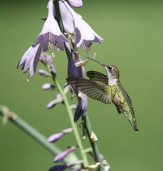 Hummingbird by Paul McCarthy