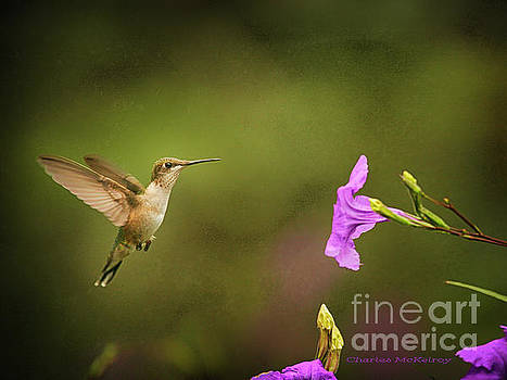 Hummingbird Pink Flower by Charles McKelroy