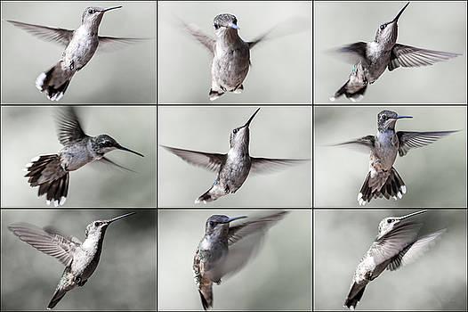 Hummingbird Poses by Betsy Knapp