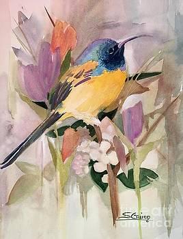 Hummingbird  by Shane Guinn