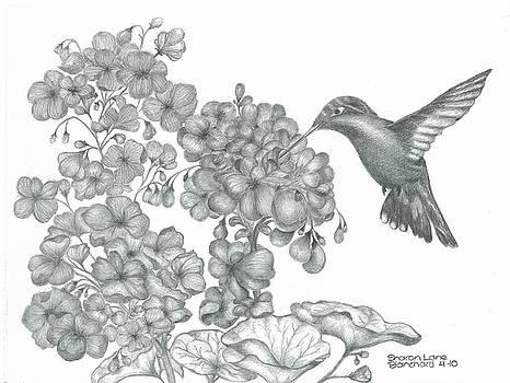 Hummingbird  by Sharon Blanchard