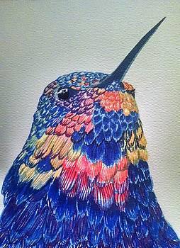 Hummingbird by Siobhan Shene