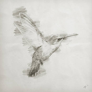Hummingbird Study by Cameron Gray