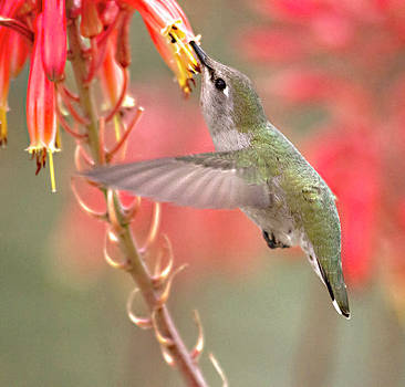 Hummingbird suspended in time by Ruth Jolly