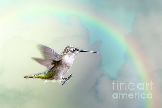 Hummingbird Under Rainbow by Bonnie Barry