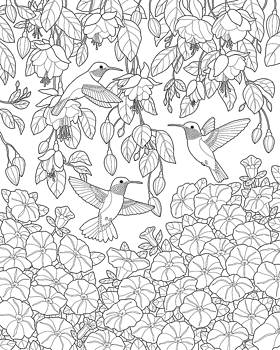 Crista Forest - Hummingbirds and Flowers Coloring Page