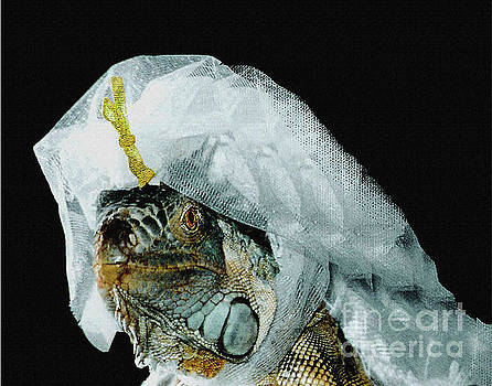 Here Comes the Iguana Bride by Carol F Austin