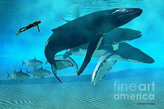 Corey Ford - Humpback Dive